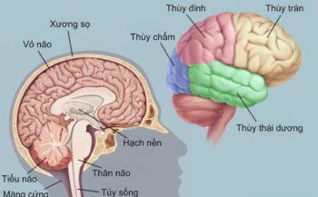 Nguyên nhân nào dẫn đến ung thư não
