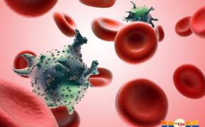 Cơn ác mộng mang tên ung thư máu