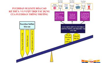 Fucoidan sulfate hóa cao