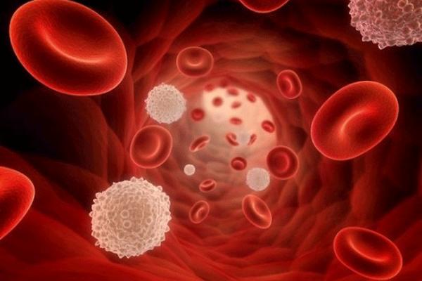 Bệnh ung thư máu xảy ra khi lượng bạch cầu trong máu không thể kiếm soát được
