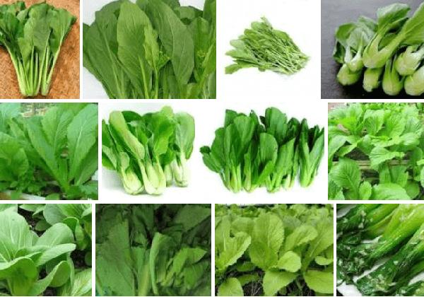 Sử dụng các loại rau cải góp phần ngăn ngừa và phòng chống các căn bệnh ung thư