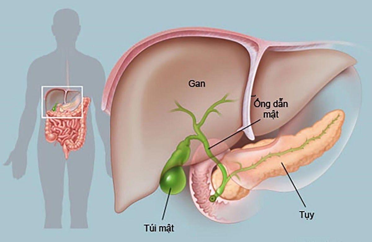 Hình ảnh giải phẫu đường mật