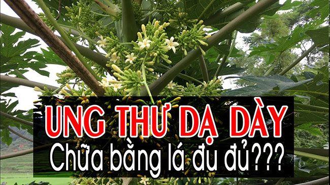chua-ung-thu-da-day-bang-la-du-du_14
