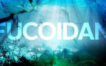 Fucoidan – Những công dụng thần kỳ đối với sức khỏe